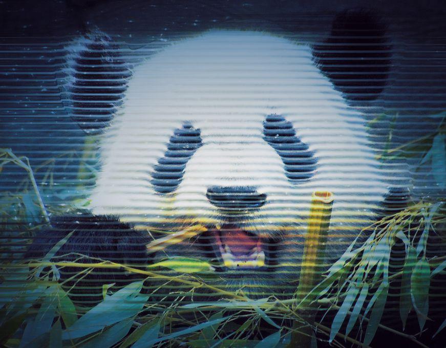 Panda hologram
