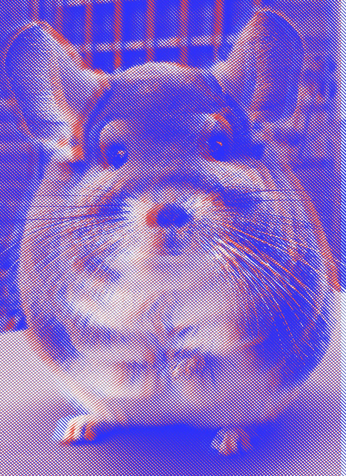 Chinchilla in 3D